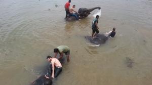 elefanti la datorie