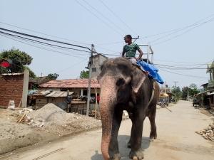 cu elefantul la șosea