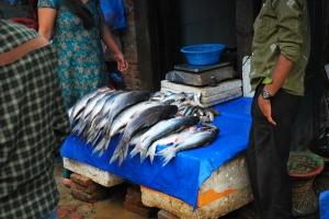 taraba cu pește