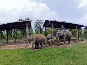 elefanti gemeni